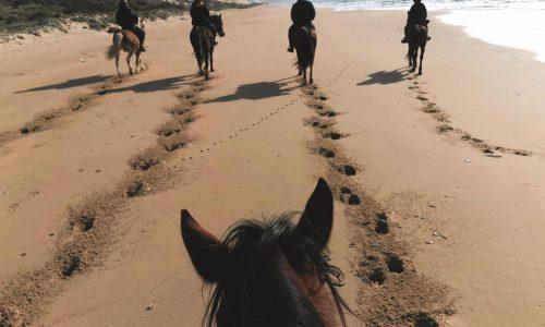 A Cavallo in libertà con l'azienda agricola Terre del Gorgo